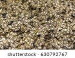 shellfish platform. many shells ... | Shutterstock . vector #630792767