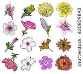 flower of summer set. tropical... | Shutterstock . vector #630809843