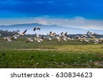 the flock is flying over the... | Shutterstock . vector #630834623