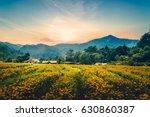 yellow flower field evening... | Shutterstock . vector #630860387