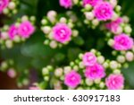 abstract kalanchoe flowers as... | Shutterstock . vector #630917183