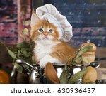 kitten in a cook's cap  cat cook | Shutterstock . vector #630936437