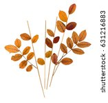 Dry Pressed Orange Leaves...