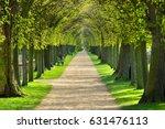 avenue of linden trees  tree... | Shutterstock . vector #631476113