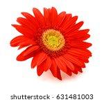 gerbera flower. hight res | Shutterstock . vector #631481003