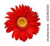 orange gerbera flower isolated... | Shutterstock . vector #631481033