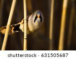 Stock photo funny bearded bird nature background 631505687