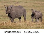 black rhino mother with her... | Shutterstock . vector #631573223