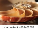 nautilus shell symmetry...   Shutterstock . vector #631682537