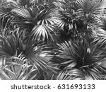 tropical palm leafs with black... | Shutterstock . vector #631693133