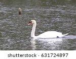 trumpeter swan | Shutterstock . vector #631724897