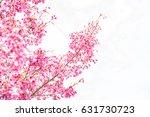 beautiful cherry blossom sakura ... | Shutterstock . vector #631730723