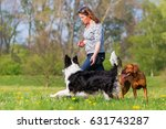 Stock photo woman plays with a border collie and a rhodesian ridgeback on the meadow 631743287