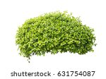bush isolated on white... | Shutterstock . vector #631754087