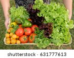 Organic Vegetables In Basket