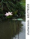 pink lotus | Shutterstock . vector #631778153