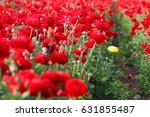 image of beautiful red spring... | Shutterstock . vector #631855487