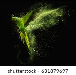 flying green parrot alexandrine ... | Shutterstock . vector #631879697