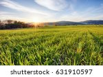 green fields of young wheat on... | Shutterstock . vector #631910597