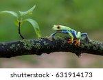 frog red eyed amazon tree frog  ...   Shutterstock . vector #631914173