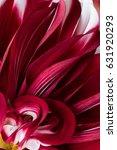 red dahlia flower macro shot.... | Shutterstock . vector #631920293