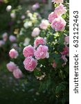 Stock photo summer garden with english roses 632122463