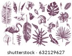 set of hand drawn tropical... | Shutterstock .eps vector #632129627
