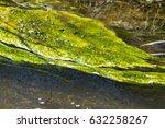 Small photo of Blue-green Alga on lake water