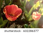 red tulips on natural... | Shutterstock . vector #632286377