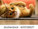 relaxed cat looking at the... | Shutterstock . vector #632318627