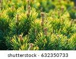 deciduous close up background...   Shutterstock . vector #632350733