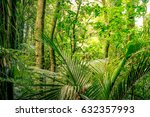 lush green foliage in tropical... | Shutterstock . vector #632357993