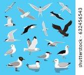 various seagull tern albatross... | Shutterstock .eps vector #632456543
