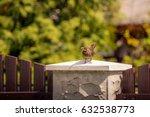 Female Blackbird Sitting On Th...