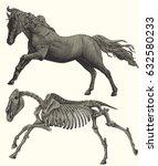 horse skeleton. design set.... | Shutterstock .eps vector #632580233