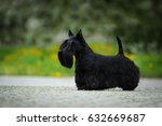 scottish terrier | Shutterstock . vector #632669687