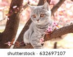 Stock photo cute cat on blossoming tree outdoors 632697107