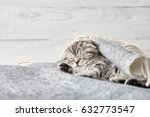 Stock photo cute scottish fold kitten sleeping in soft blanket on wooden boards background 632773547