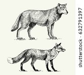 wild grey wolf and red fox...   Shutterstock .eps vector #632791397