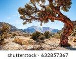 beautiful tree near the tunupa... | Shutterstock . vector #632857367