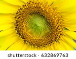 Small photo of Yellow sunflowers, blooming petals and beautifully contrasted vivid contrasts indicate hope and power overwhelmed by distinctive colors and colors.