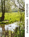 Duck Swims In Ditch Between...