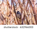 House Sparrow Deep In Some...