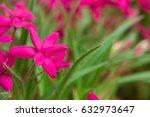 beautiful pink flowers.  south... | Shutterstock . vector #632973647