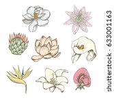 colored drawing botanical... | Shutterstock .eps vector #633001163