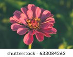 beautiful flower blossom in the ... | Shutterstock . vector #633084263