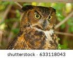 closeup of a great horned owl...   Shutterstock . vector #633118043
