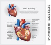 heart anatomy vector... | Shutterstock .eps vector #633152183