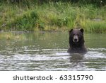 grizzly looking out of an alaskan lake - stock photo