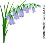 Bluebell Flowers.